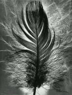 Prête moi ta plume